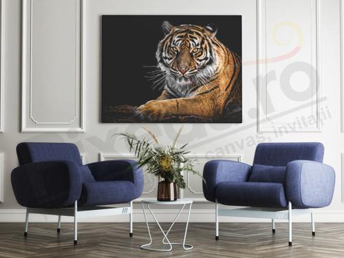 Imagine pentru categorie Tablouri canvas animale