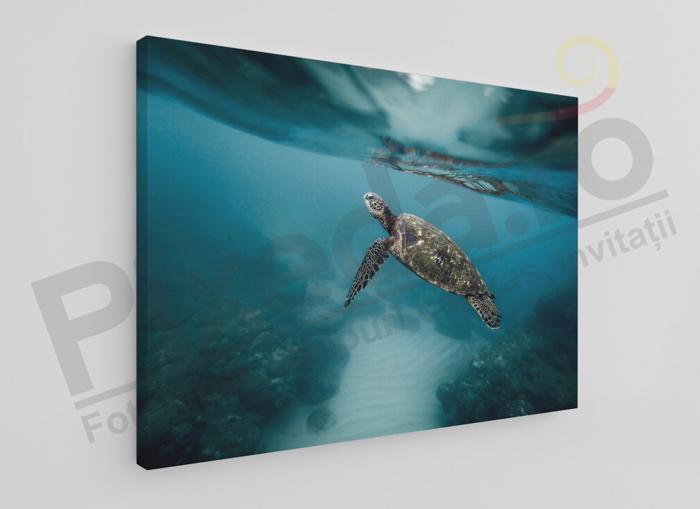 Imagine Tablou canvas animale PX 20007 broasca testoasa