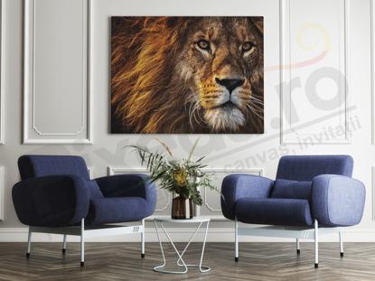 Imagine Tablou canvas animale PX 20008 leu