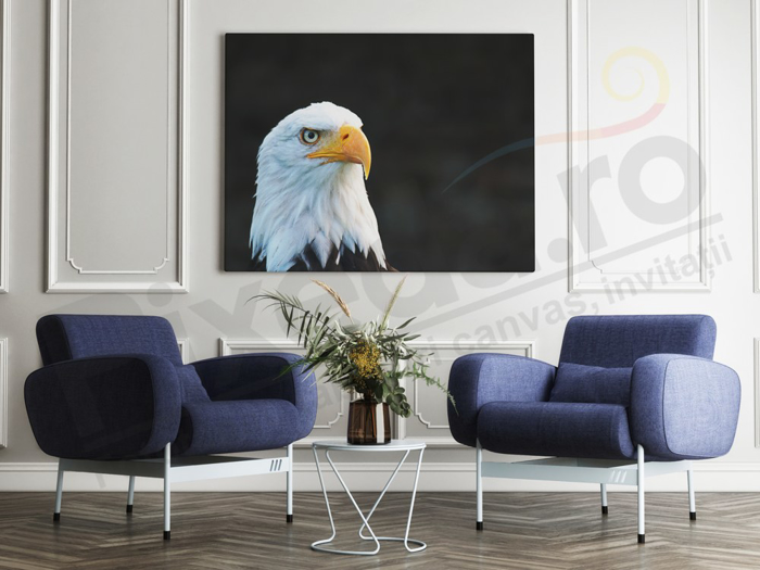 Imagine Tablou canvas animale PX 20009 vultur