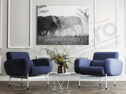 Imagine Tablou canvas animale PX 20012 elefanti in natura