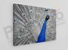 Imagine Tablou canvas animale PX 20015 paun design modern