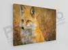 Imagine Tablou canvas animale PX 20016 vulpe
