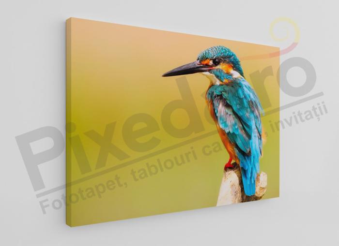 Imagine Tablou canvas animale PX 20018 pasare