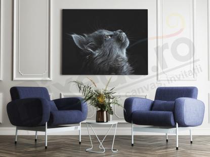 Imagine Tablou canvas animale PX 20021 pisica