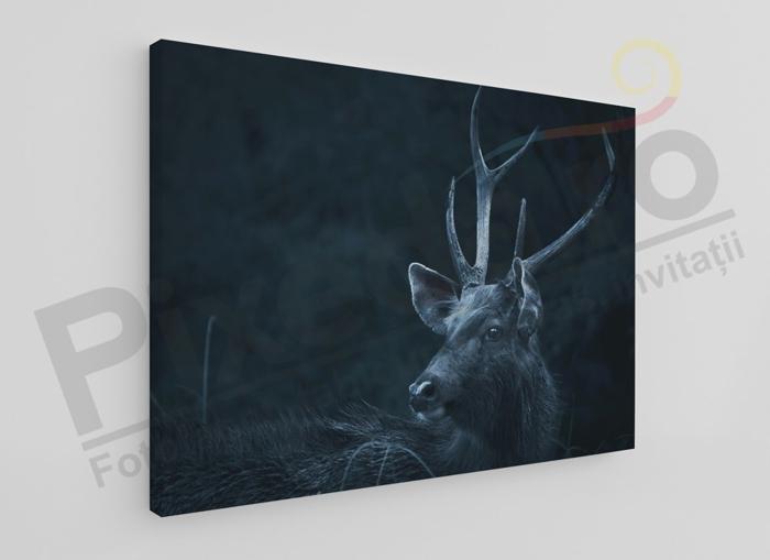 Imagine Tablou canvas animale PX 20022 cerb