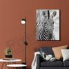 Imagine Tablou canvas animale PX 21021 zebra
