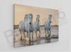 Imagine Tablou canvas peisaj PX 20045 cai albi