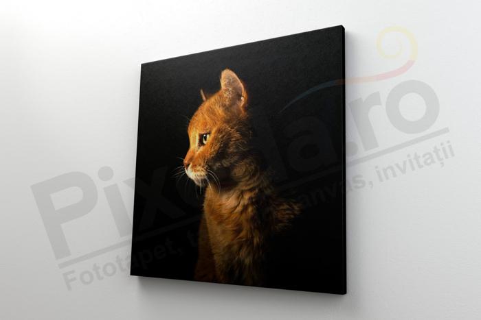 Imagine Tablou canvas animale PX 22003 viitor leu