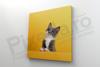 Imagine Tablou canvas animale PX 22005 felina intreprinzatoare