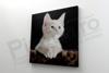 Imagine Tablou canvas animale PX 22006 felina alba