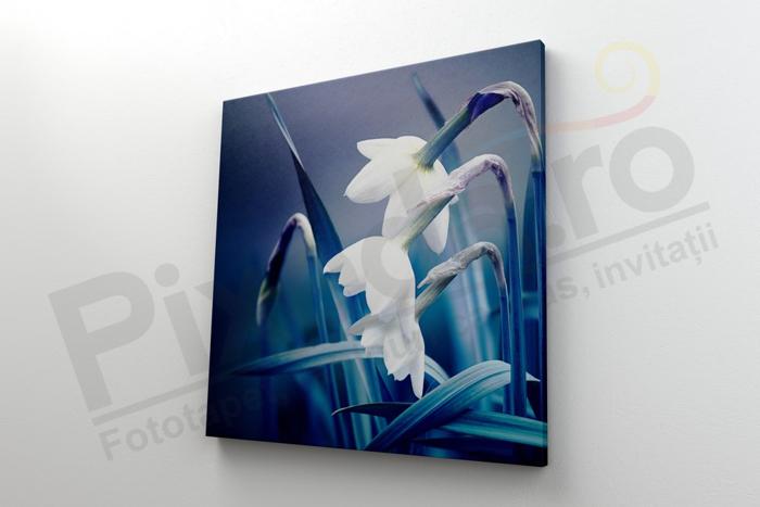 Imagine Tablou canvas flori PX 22024 narcise albe